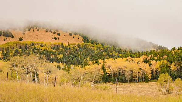 Changing Color of Aspen on Route 160