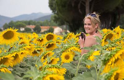 the sunflower fields near Pisa
