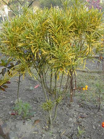 pretty_plant_2