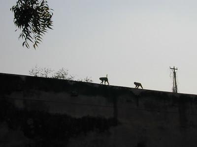 monkeys_4