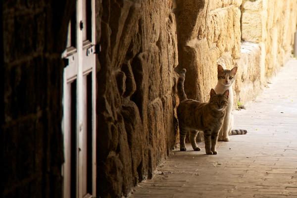 Sidon cats