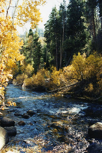 10/22/02 Lee Vining Creek, Lower Lee Vining Campground (off Hwy 120/Tioga Pass). Mono County, CA