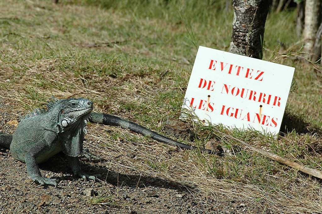 """""""Don't feed the iguanas,"""" the sign says."""