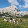 Our trekking group and alpine flowers in Dolomite(north Italy)