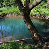 McConnell Springs<br /> Blue Hole Spring