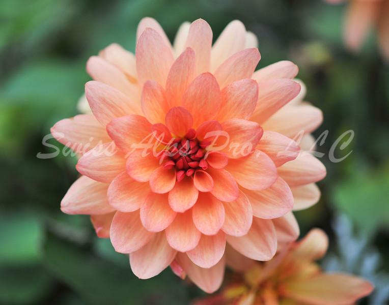 DSC_0113-Flower