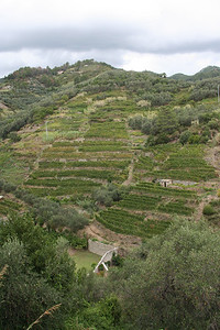 Pictured here is one of the many terraced hillsides in the Cinque Terre, taken on a short hike up a trail above Monterosso..