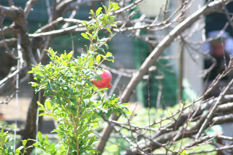 Hot pomegranate action.