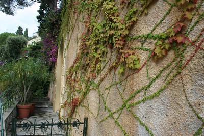 Wild & wacky vines.