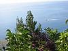 Mediterranean plants.