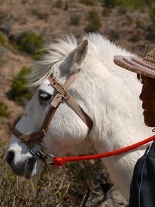 Shuhe - Pony