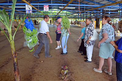 Entering the Banana Plant for Dole