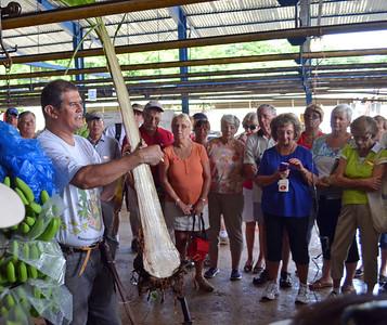 Guide Slides Machete thru Banana Plant