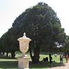 The gardens of Hampton Court Palace