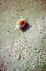 Pretty snail at low tide