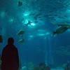 Oceanarium aquarium in Lisbon, Portugal