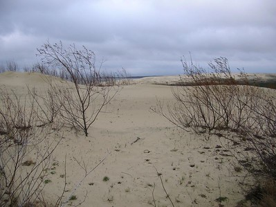 Curonian Spit - near Nida