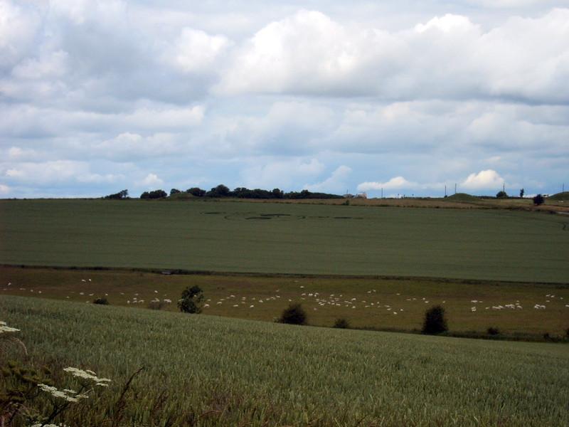 Crop circle, near Avebury