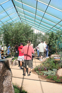 11/13/05 Butterflies Alive! Exhibit. The Living Desert Zoo & Gardens, Palm Desert, Riverside County, CA