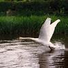 Swan (Jean).