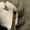 Swan II (Jean).