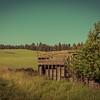 Woodland Shed