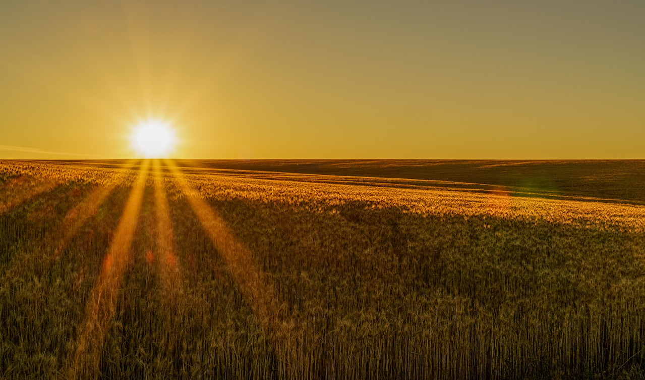 Wheat and Sunrise