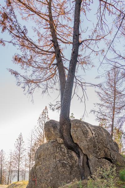 Hard Life Tree