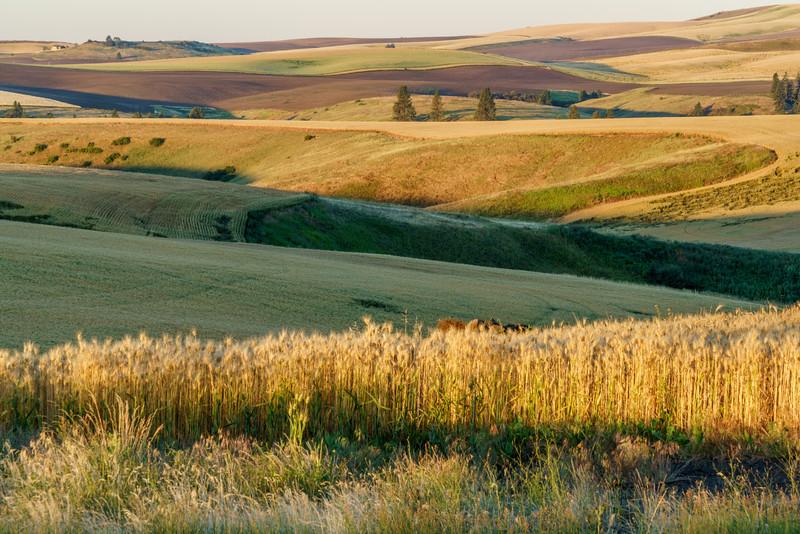 Rolling Prairie