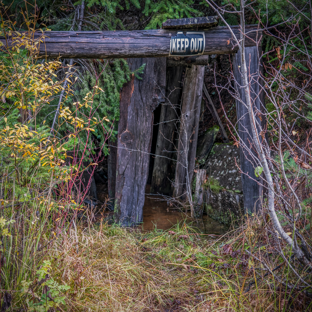 an abandoned gold mine.