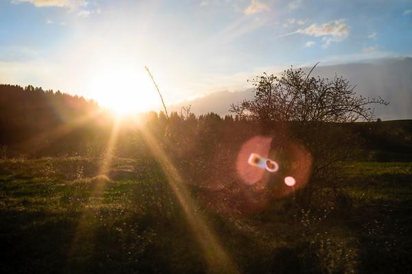 Evening Sunrays