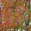 Oak tree on Cat City road