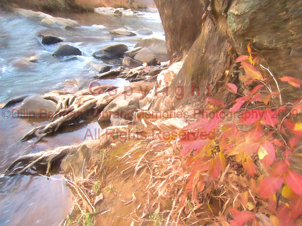 00aFavorite 20141204 Eno River (1524)