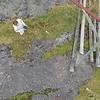 9-1-17241858lofoten Nusfjord Fishing Village