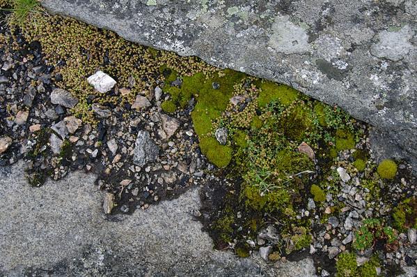 Vestvågøy: Vikbukta (Nature Study)
