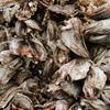 Dried Cod-Heads