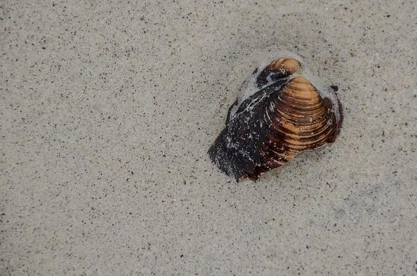 Ramberg Beach: Shell