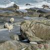 Utakleiv Beach: Sheeps World