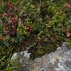Flakstadøy: Near the Cascades