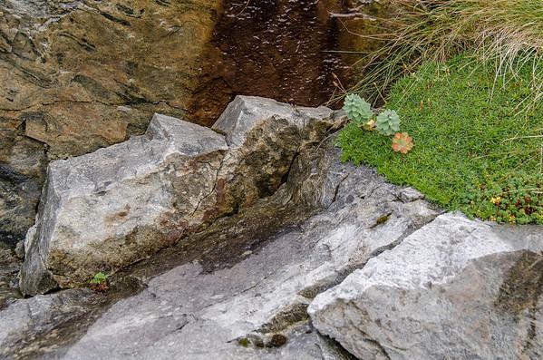 Flakstadøy: Nature Study near The Norwegian Sea