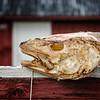 Nusfjord: Dried Cod-Head