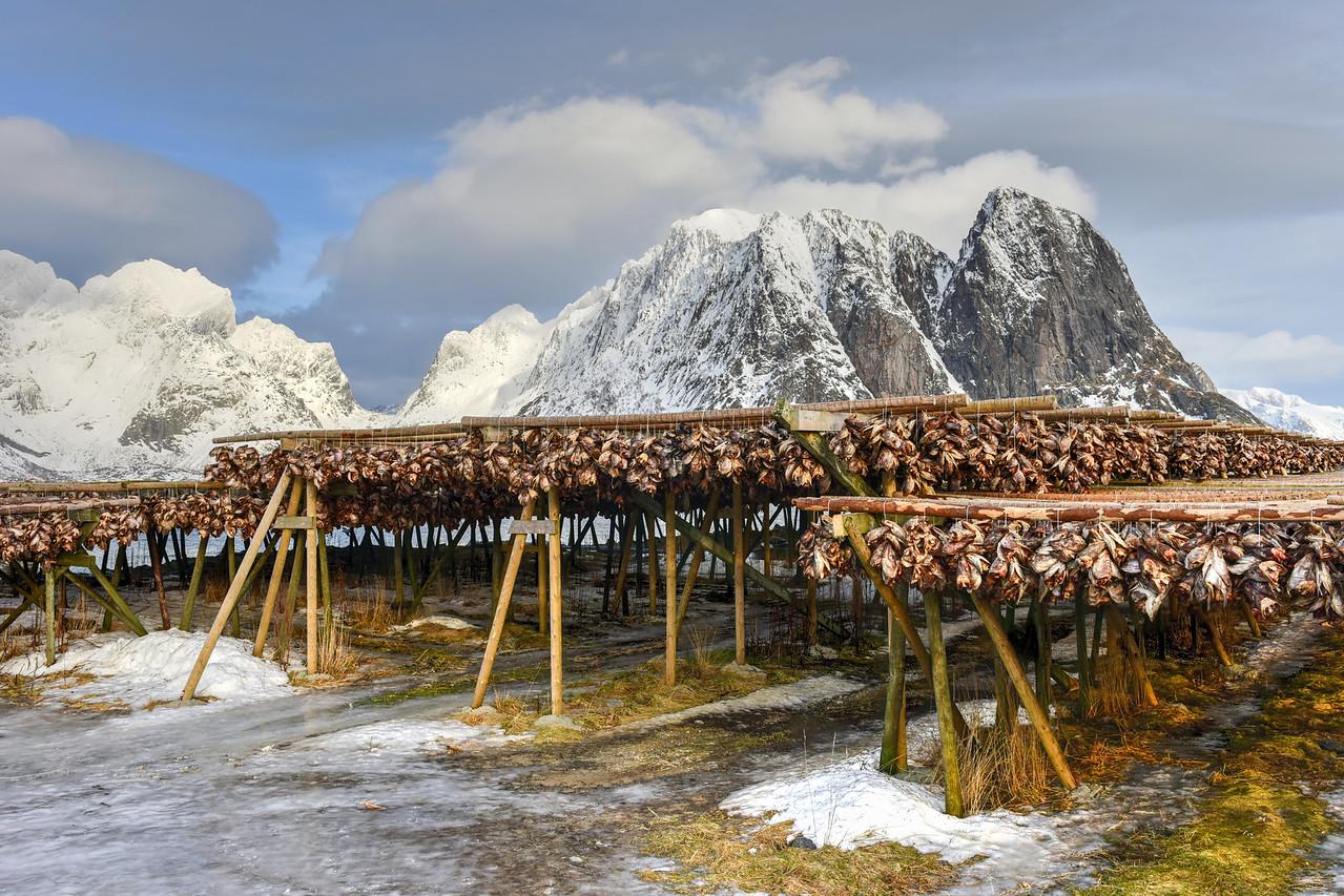 Stockfish - Reine, Lofoten Islands, Norway