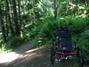 Trikes on a trail