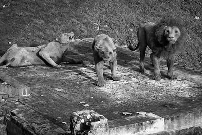 Lion sculptures, wire mesh