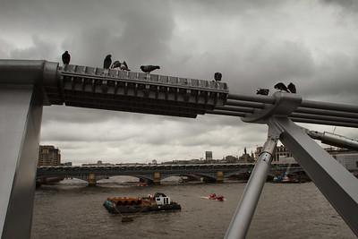 Millenium Bridge Pigeons