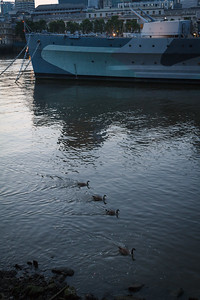Geese in the Thames