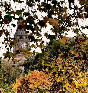 Big Ben framed through the leaves of fall at a park near Buckingham.
