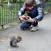 A boy takes a picture of the squirrel at the St James Park in London, England.