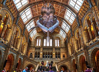 Sept. 30, 2017 - London   Natural History Museum  Credit- Robert Altman