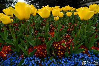 Flowers in Bath, England